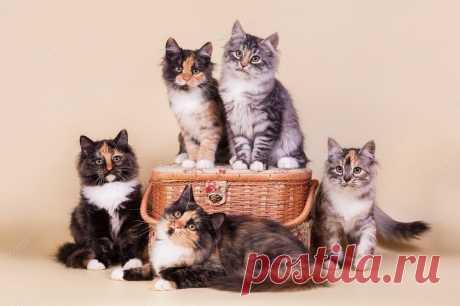 А ВЫ ЗНАЕТЕ, как цвет вашей кошки влияет на вашу судьбу? ...