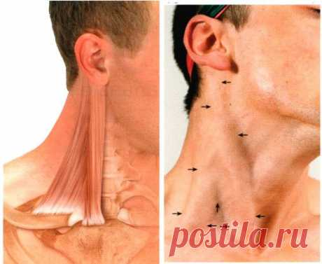 The double chin, floated a face form - responsible is found\u000aProblems with the lower part of the person – the second chin, the departuring oval are familiar to very much of you. \u000aAs a rule, only one muscle with the long name – the grudinno-clavicular and mastoidal (GCM) is guilty of it. \u000aYou will find it at once if you turn the head aside – she acts on a front and lateral surface of a neck as the thick roller at once. \u000aTo show completely …