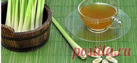 Как сделать чай из лимонной травы, чтобы избавиться от дрожжевой инфекции и исцелить пищеварительную систему! - Стильные советы
