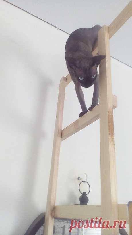 Это все для меня: жизнь кошки в ремонте | Дом с огородом в пригороде | Яндекс Дзен Воскресный пост о кошке, как участнице событий житья и ремонта в доме: охота на рулетку, любовь к светильнику для растений, от солнца под тентом и лазит по стеллажу.