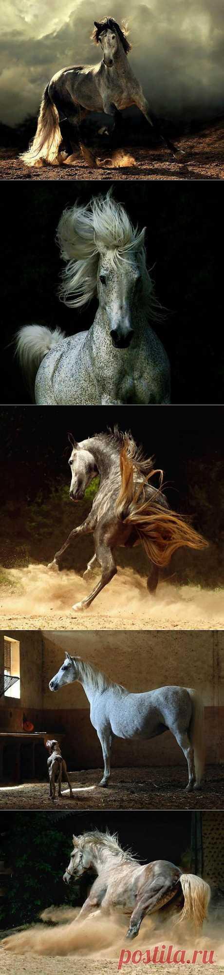 Грация и красота лошади | Зашибись