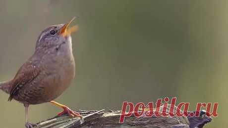 Прекрасные трели пташки поют нам про доброе утро