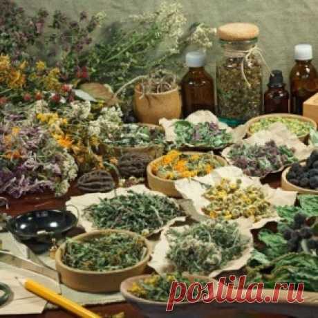 Травы по рецепту. Как и что лечит фитотерапия