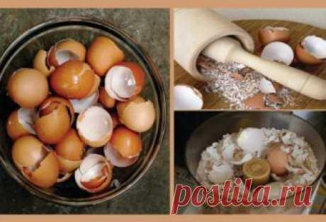 4 веских причин не выбрасывать яичную скорлупу! Важно знать!