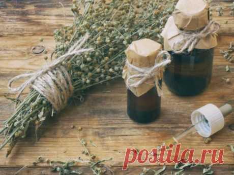 Лечебные свойства полыни — СОВЕТ !!!