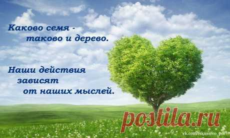 Каково семя, таково и дерево. Наши действия зависят от наших мыслей.