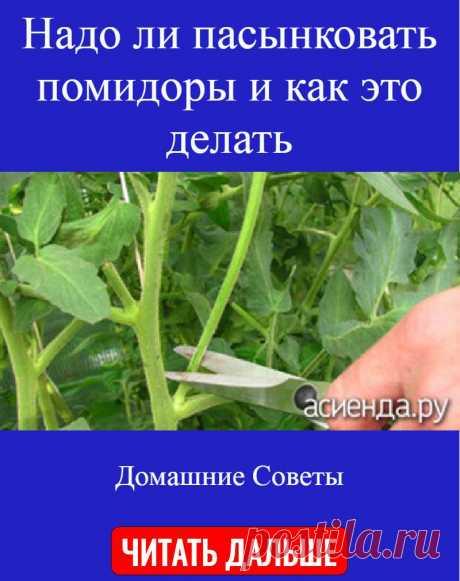 Надо ли пасынковать помидоры и как это делать