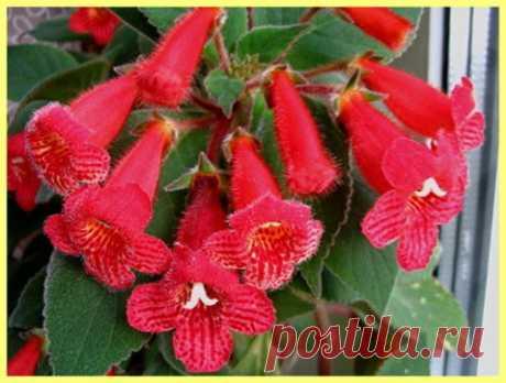Неприхотливые комнатные растения цветущие круглый год: фото и описание | Хозяин Дачи
