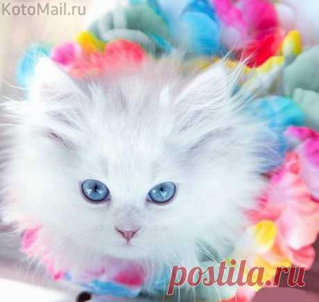 Голубоглазая красотка