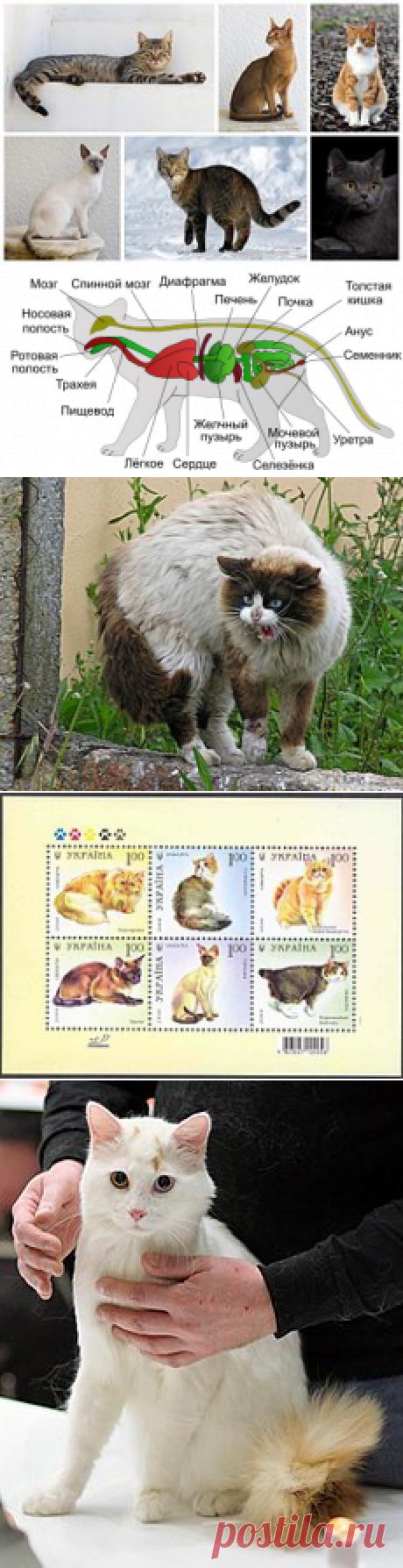 Кошка — Википедия