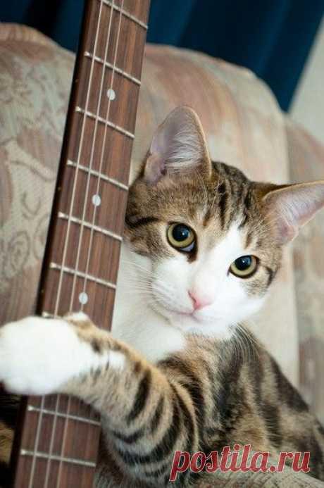 Let me serenade you.