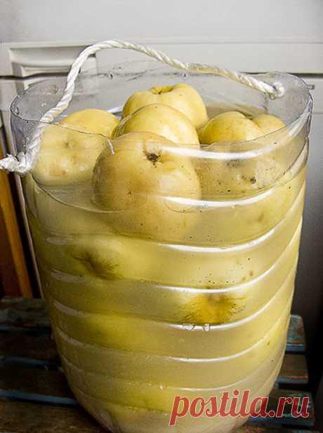 Яблоки моченые В этом году вырос неплохой урожай Антоновки. Антоновка яблоко вкусное, но немного кисловатое - много не съешь. Куда девать, спросите вы? Позже немного я постараюсь…