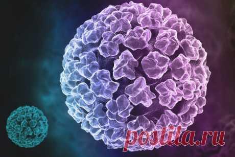 16 тип вируса папилломы лечение ВПЧ 16 типа у женщин и мужчин, лечение вируса папилломы человека