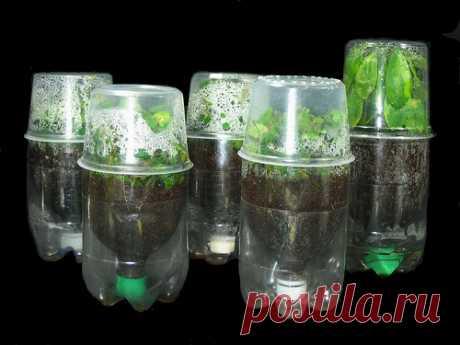 Из пластиковой бутылки - много идей