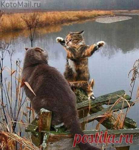 Диалоги о рыбалке)