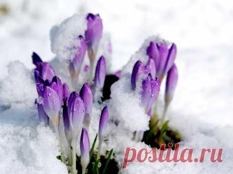 Я тоже таю, как весенний снег... (Ирина Самарина-Лабиринт) / Стихи.ру