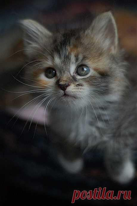 Selma Darling | Flickr - Photo Sharing!