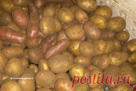 Как подготовить картофель к посадке за 7 шагов, собрав лучший урожай с маленькой площади участка | Дача - это маленькая жизнь | Яндекс Дзен