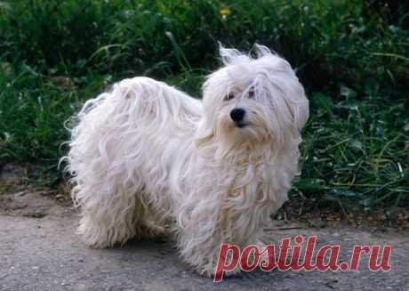 10 лучших маленьких пород собак для новичка | PetTips