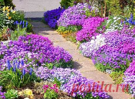 С ЭТИМИ ЦВЕТАМИ ВАША КЛУМБА БУДЕТ ЦВЕСТИ ВСЕ ЛЕТО! 13 очаровательных низкорослых цветов.