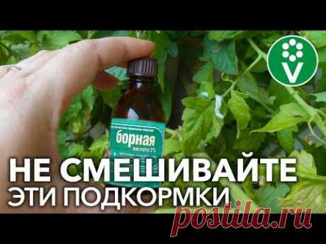 НИКОГДА НЕ СМЕШИВАЙТЕ ЭТИ 2 ПОПУЛЯРНЫЕ ПОДКОРМКИ для томатов, перцев и огурцов!
