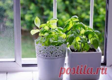 Магические растения. Которые нужно выращивать у себя дома
