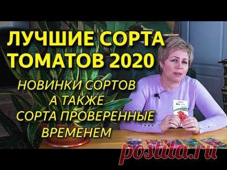 Лучшие сорта томатов 2020 года  Новинки сортов помидор и томаты проверенные временем!