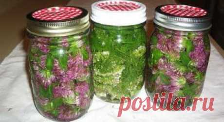 Clover instead of aspirin In my family for many years apply as many diseases medicine a clover — prirodn...
