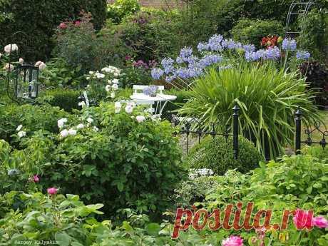 7 красивых коттеджных садов | Сады и цветы | Яндекс Дзен