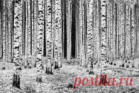 Остановись, мгновенье! Как были сделаны лучшие 10 фотографий природы по итогам конкурса Nature Photographer of the Year - 2020 | Сакума | Яндекс Дзен