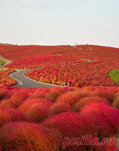 Национальный приморский парк Хитачи, Япония