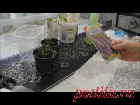 Результат посева в пелёнки - высокая, быстрая всхожесть почти любых семян (кроме самых мелких - петунии, лобелии, бакопы)! Не надо земли! Экономит место!