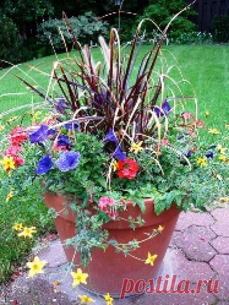 Как стать партизаном-садовником