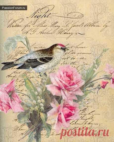 Птички и прочая прелесть - запись пользователя Lenucaarchery (Лена) в сообществе Декупаж в категории Картинки для декупажа
