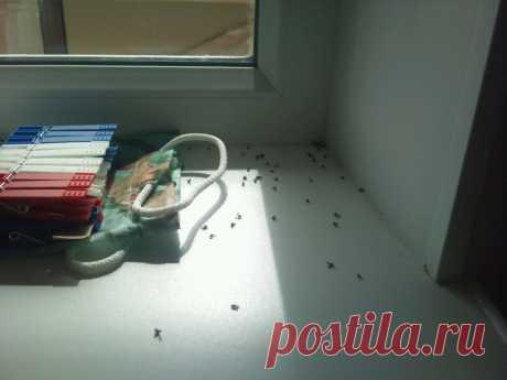 4 способа избавления от мошек и комаров | Делимся советами