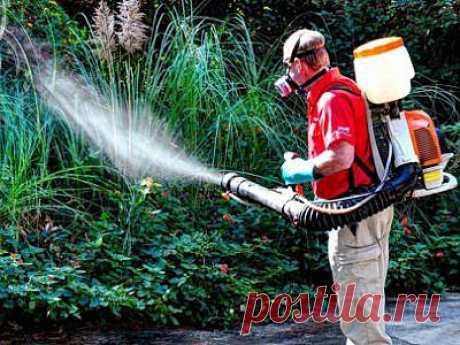 Обработка участка от комаров – советы садоводам