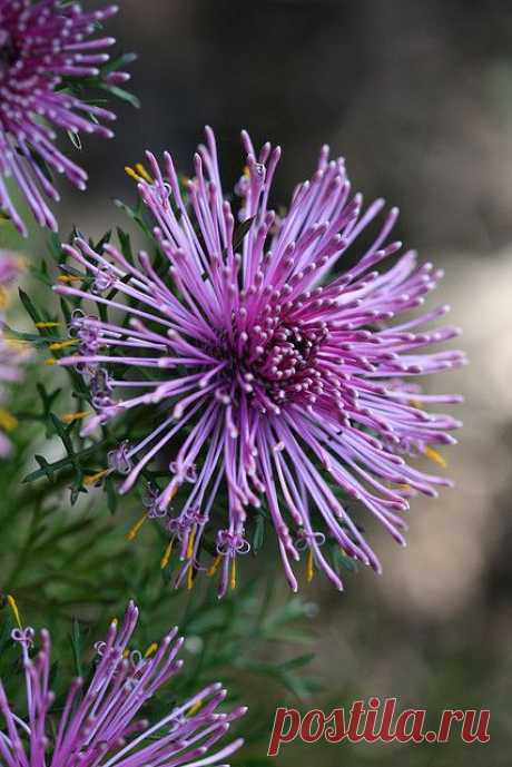 (2) Rose Cone Flower | Landscape Gardening
