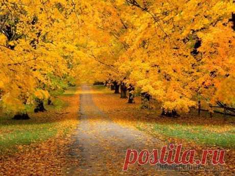 Вот и осень- подруга пришла (Стих) Вот и осень- подруга пришла,и листва нежно в танце кружИтся,грусть на плечи внезапно легла,дождь тихонько в окошко стучится.Улетают на юг журавли,в те края, где всегда солнце светит,не поют по утрам с...