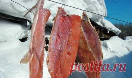 Как солят рыбу на Крайнем Севере. Простой, но обалденный рецепт   MASTER-FISHER.RU   Яндекс Дзен
