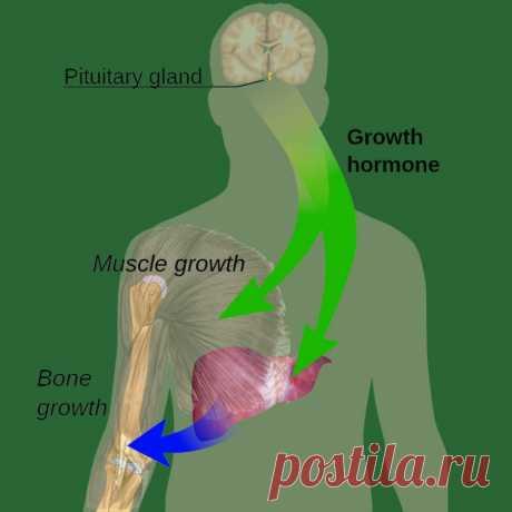 Как наладить выработку гормона молодости и стройности / Будьте здоровы