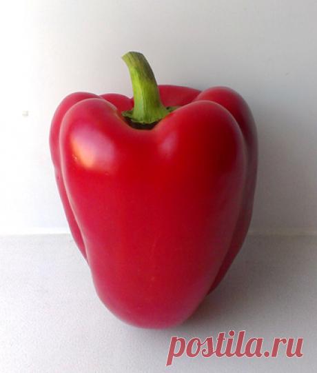 Как вырастить болгарский перец на своем участке