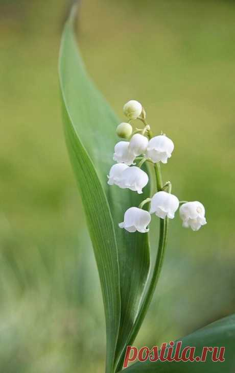 Цветы не просто радуют глаз, они преображают нашу реальность, поднимают настроение и наполняют душу праздником.