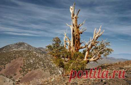 Топ-10 старинных деревьев со своей историей, которые переживут нас всех - Большой рейтинг