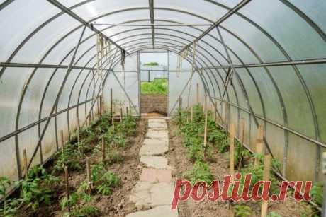 Высадка рассады томатов в грунт и теплицу   Томаты (Огород.ru)