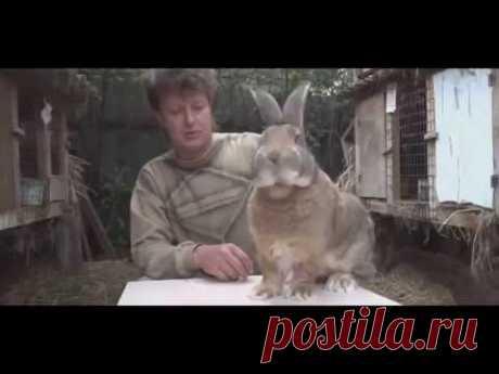 Каких кроликов разводить