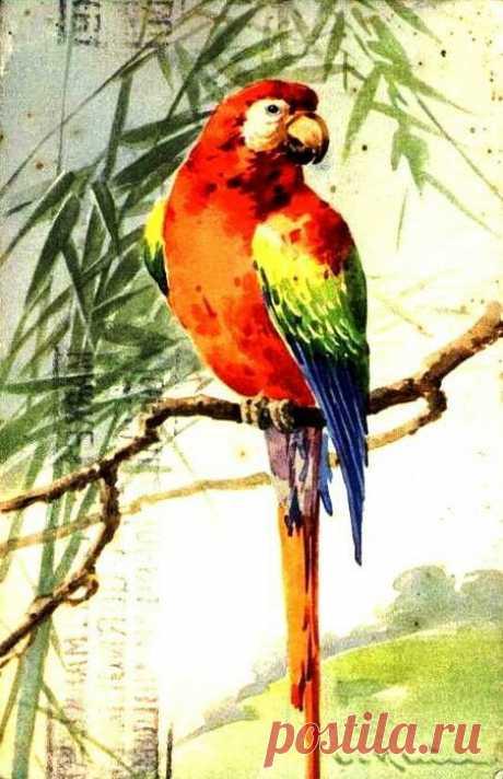 (723) Painting by Catherine Klein. | pintura de animais