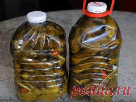Очень вкусные огурцы в пластиковой бутылке: на вкус как из бочки! — ПОЛЕЗНО ЗНАТЬ