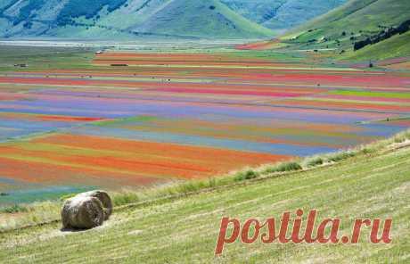 Цветущие поля Италии: luyssi70