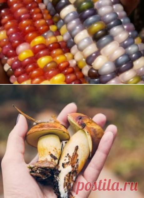 Как вырастить лесные грибы на даче | На грядке (Огород.ru)