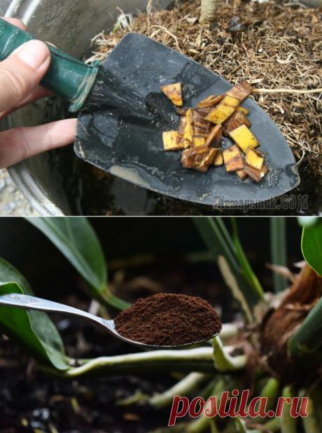 Los abonos eficaces para de habitación y las plantas de jardín, que son casas a cada uno